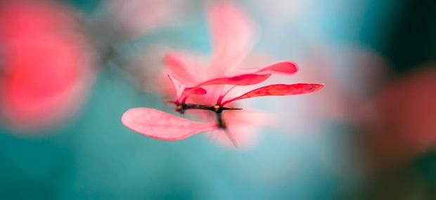 Achtsamkeit bedeutet ganz im Moment zu sein, ohne zu urteilen.