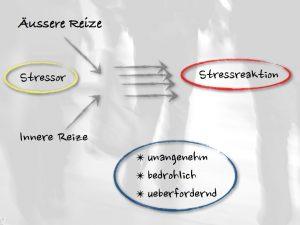 stress vorgang stressor stressreaktion äussere reize innere reize